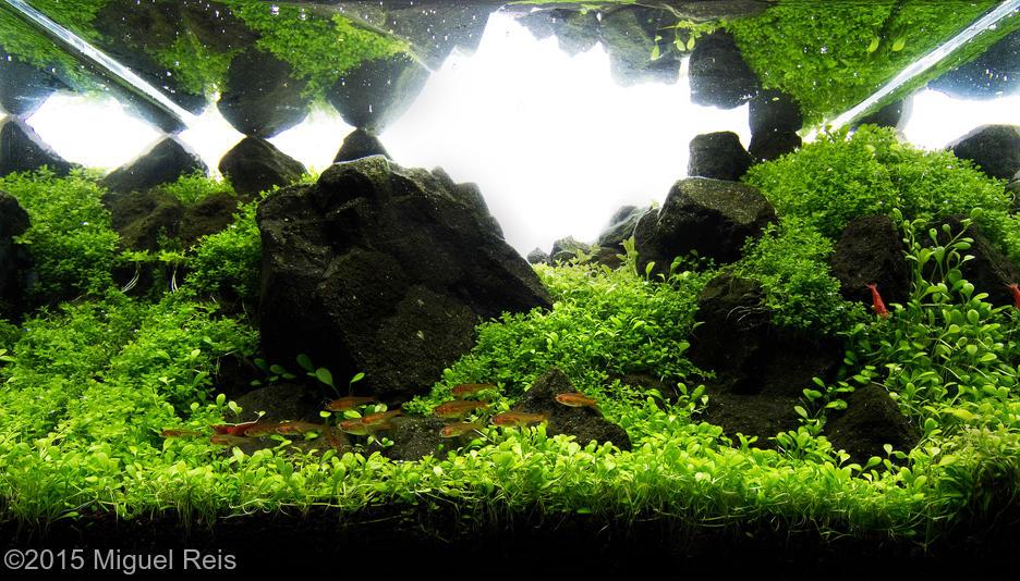 gallery_1_81_2657.jpg