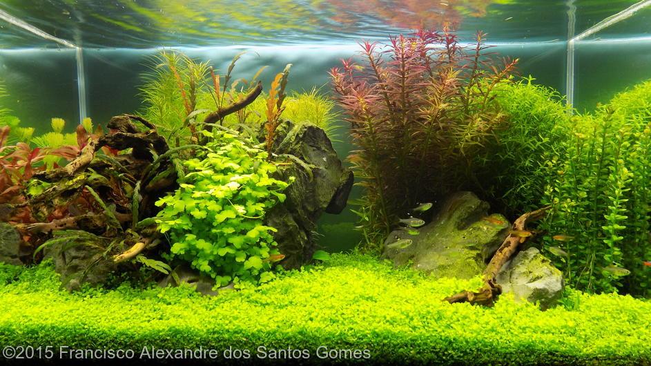 gallery_1_83_101653.jpg