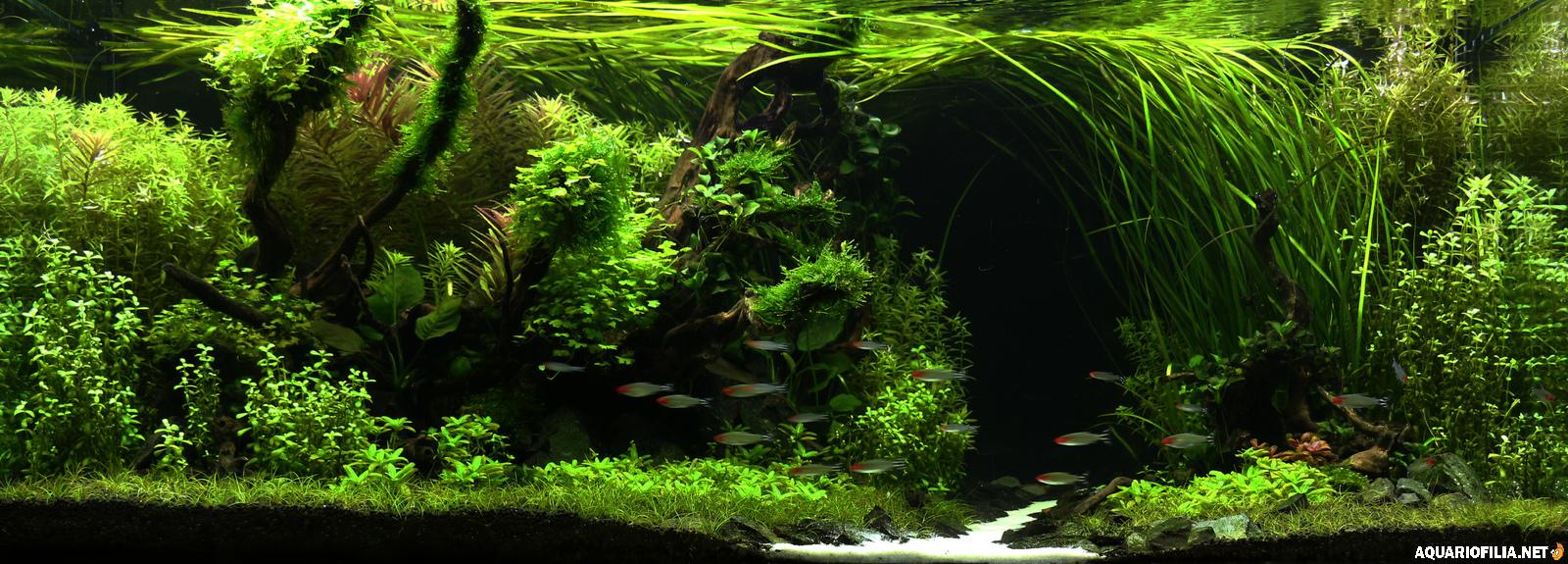 large.Rainforest.jpg