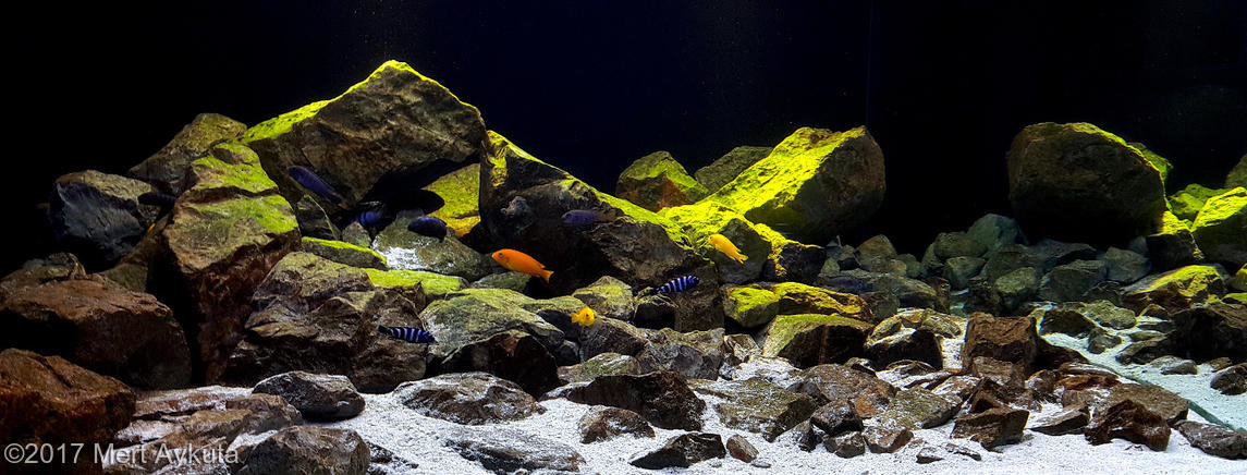 Top10f AGA 2017 Biotope Aquascape.jpg