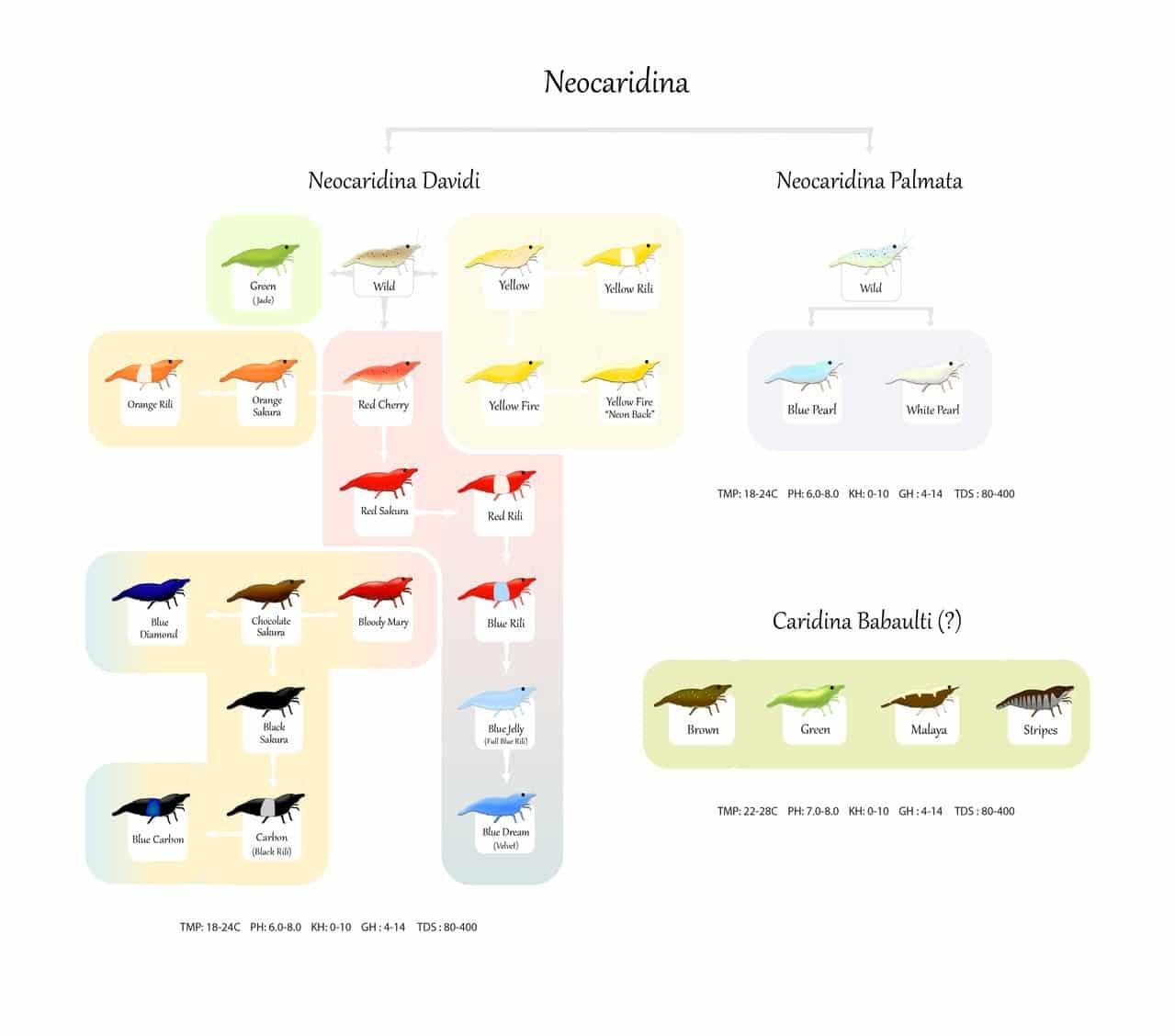 Neochart8-01.jpg