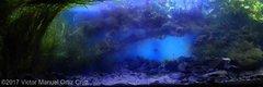 Top10c AGA 2017 Biotope Aquascape.jpg