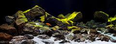 Top10f AGA 2017 Biotope Aquascape.jpg
