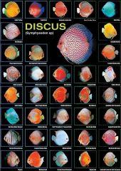 Galeria de Peixes de Água Doce