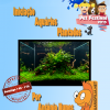 Workshop 2015 Aquarios Plantados Petfestival 2015