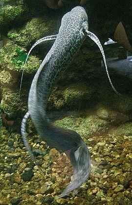 "River Monsters Season 2x04 ""Congo Killer"""