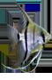 Pterophyllum Scalare 'Escalar'.png