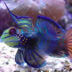 TullyFish