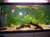 Bateria de 3 aquarios - last post by helio.salgueiro