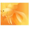 Mudança do aqua para goldfish - last post by Linus