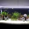 estrutura de movel para aquario - last post by diogo257