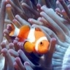 "Monitorizar o aqu�rio a dist�ncia. ""AquaPi"" - last post by RubenSilva17"