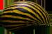 Neritina_natalensis