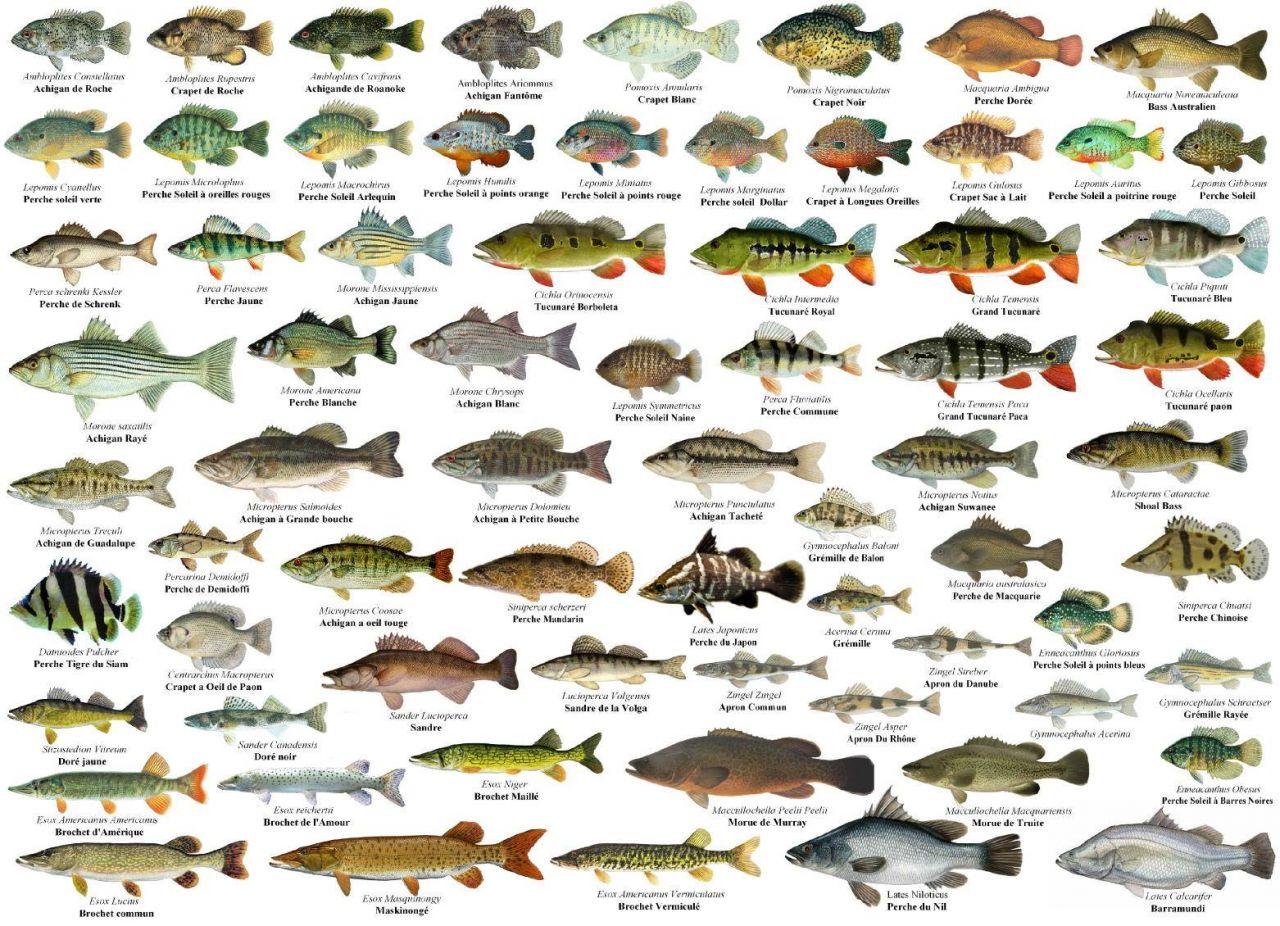 фото и описание пресноводных рыб россии