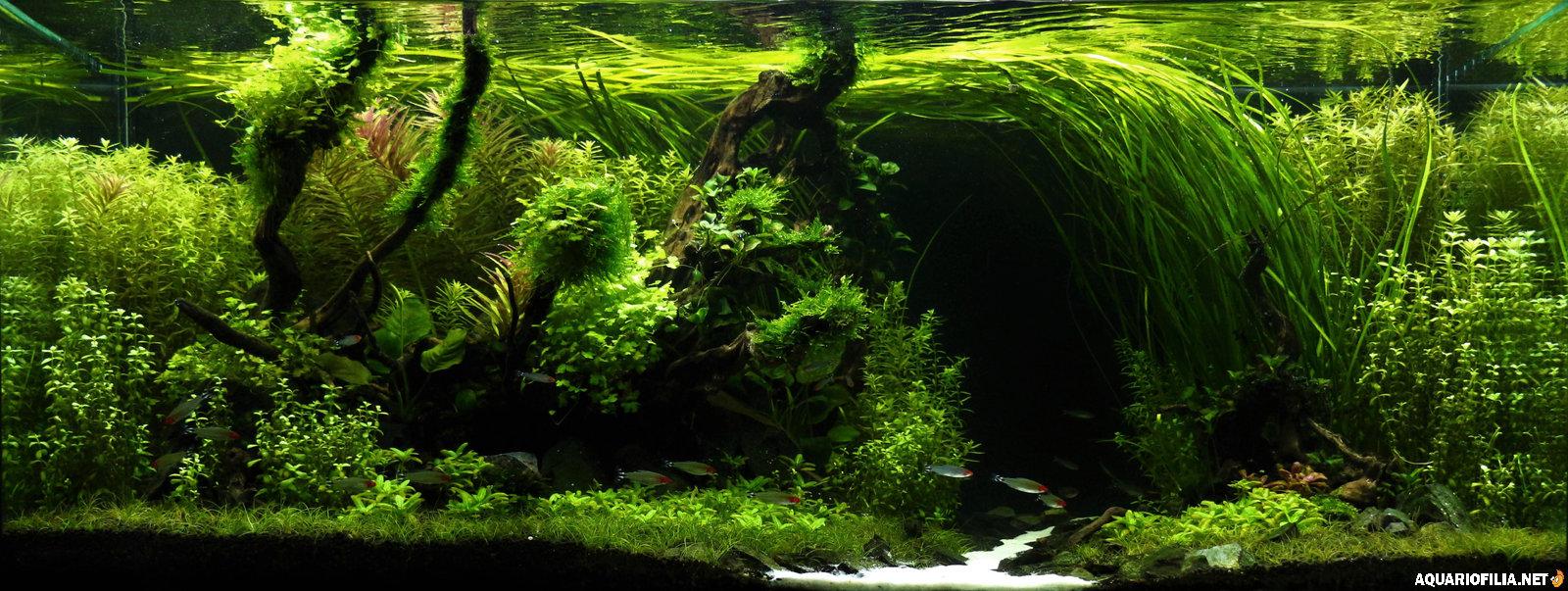 large.5a19e4261ad02_Rainforest-IIAC.JPG