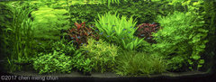 2nd place AGA 2017  Dutch Aquascape.jpg