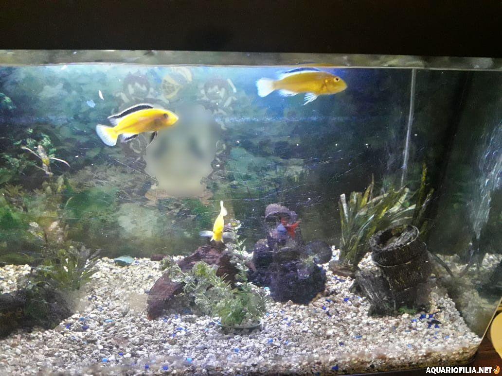 large.07_peixes_3_malawi.jpg