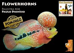 Cartaz   Flowerhorns