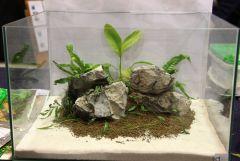Concurso mini-aquarios plantados - GAD