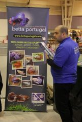 BettaPortugal na PETFESTIVAL 2012
