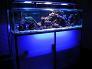 paulo vieira aquarios
