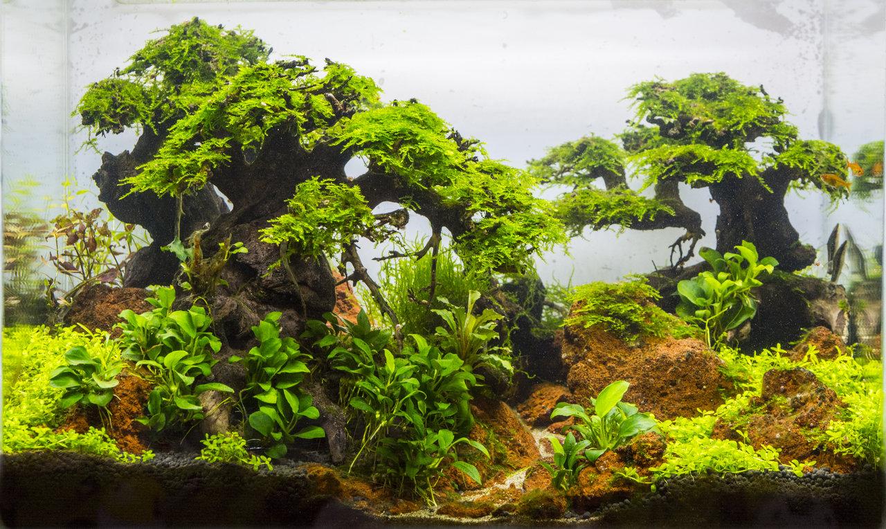 Old forest 6 months.jpg