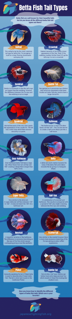 Betta-Fish-Tail-Types.png