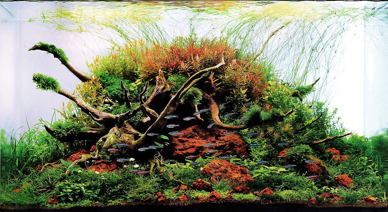 Deep Rooted 60l.jpg