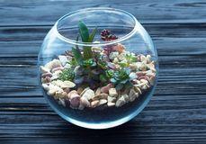 mini-jardim-no-vaso-de-vidro-fundo-madeira-104774832.jpg
